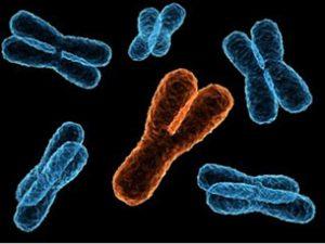 kromosom x dan y pada sperma